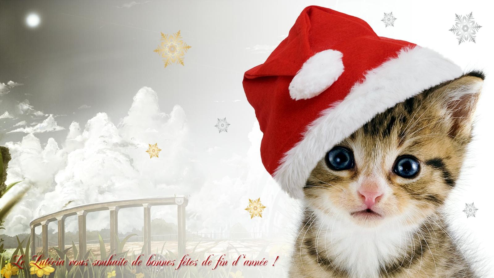 La page d tente du lut cia votre dancing rennes - Image de chat de noel ...